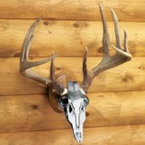 Do-All Iron Buck Antler Mount - Oak