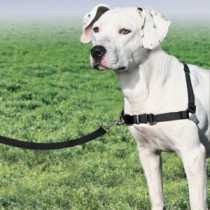 Premier Easy Walk Dog Harness (MEDIUIM)