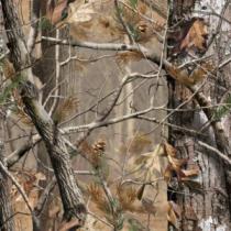 Prois Women's Generation X Jacket - Realtree Ap Hd 'Camouflage' (MEDIUM)